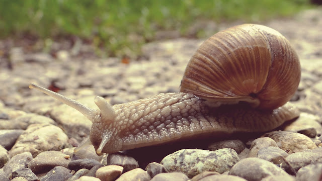 A snail sitting on the ground