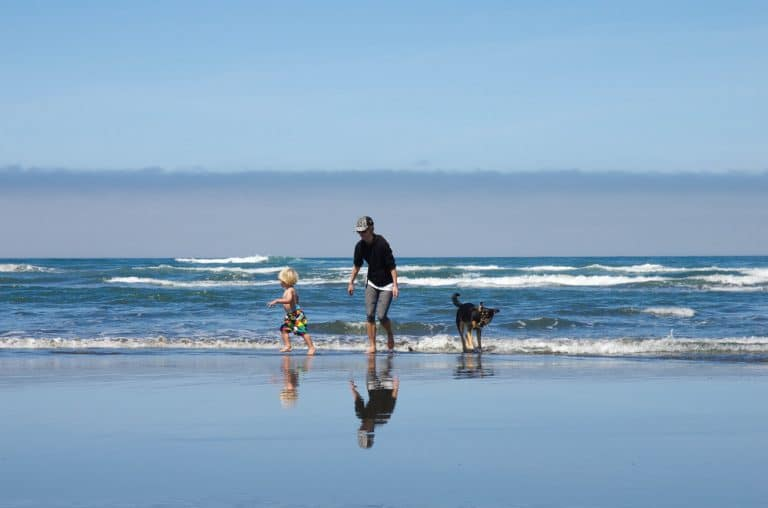 A man and a dog walking on a beach