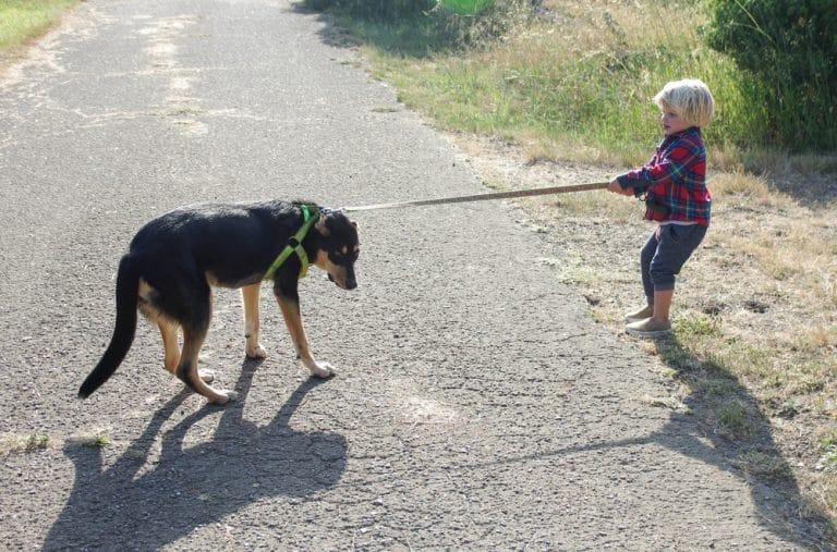 A dog on a leash walking down a dirt road