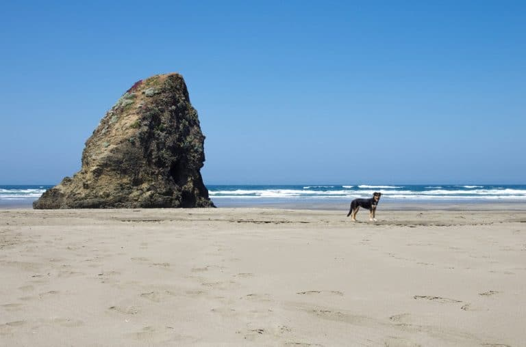 A group of people on a beach with Haystack Rock in the background