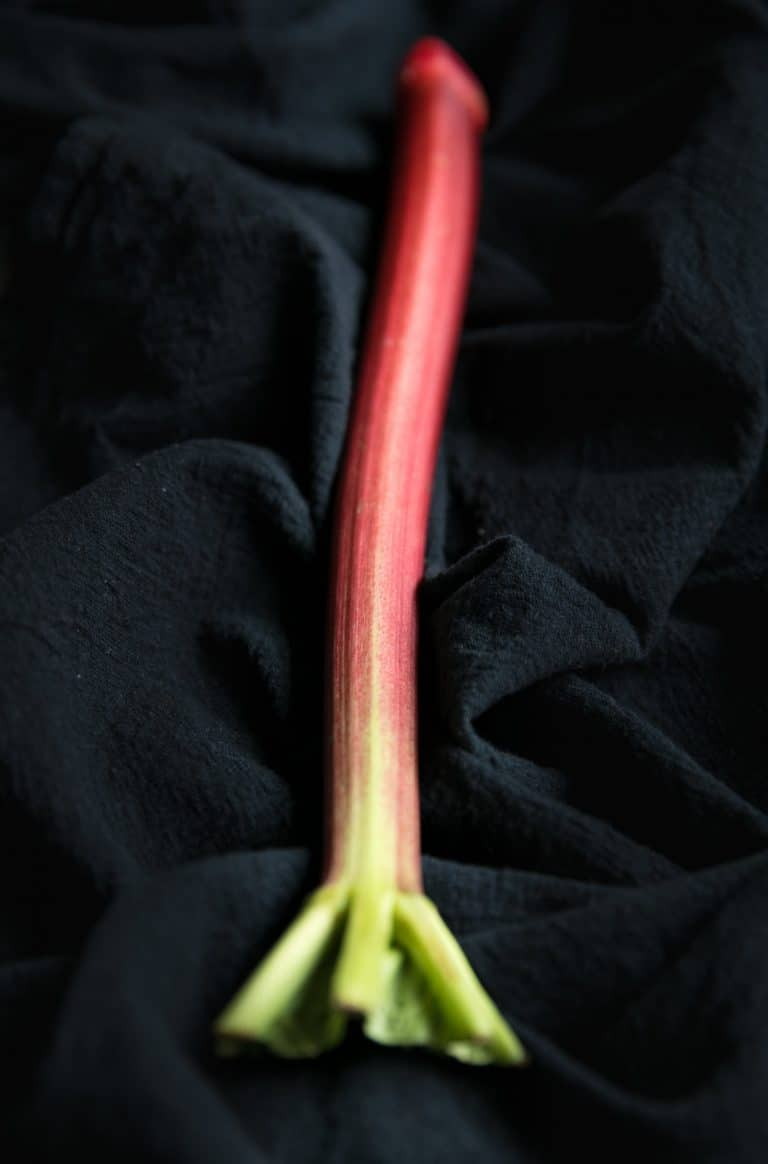 single rhubarb stalk